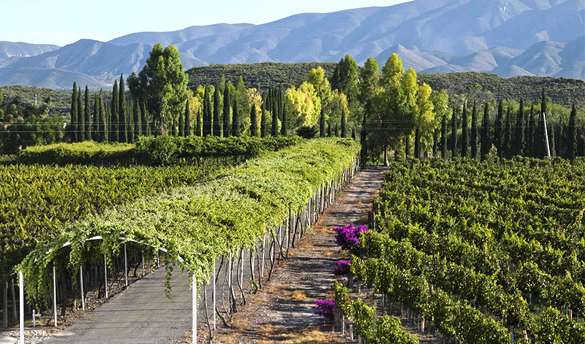 Casa Madero Winery